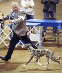 Judges Board - Sighthoundfestival